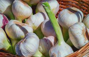 Grow your own garlic