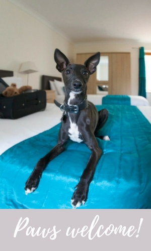 Isle of Wight hotels - dog friendly hotels