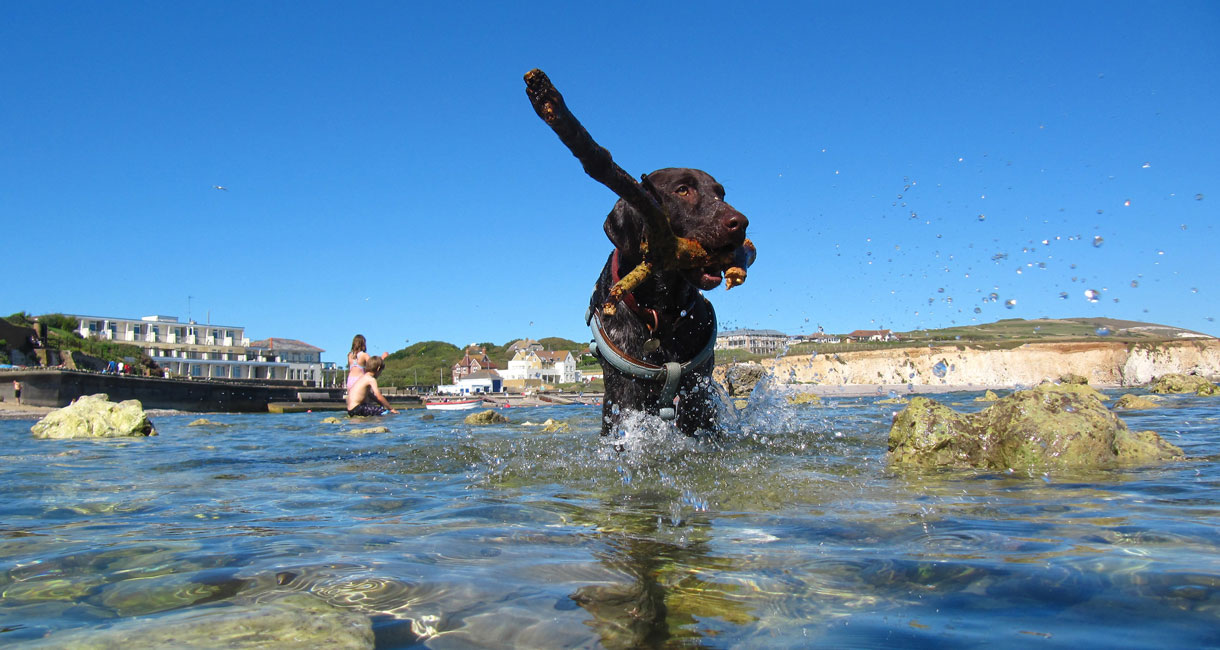 Four Legged Friendly Holidays on the Isle of Wight