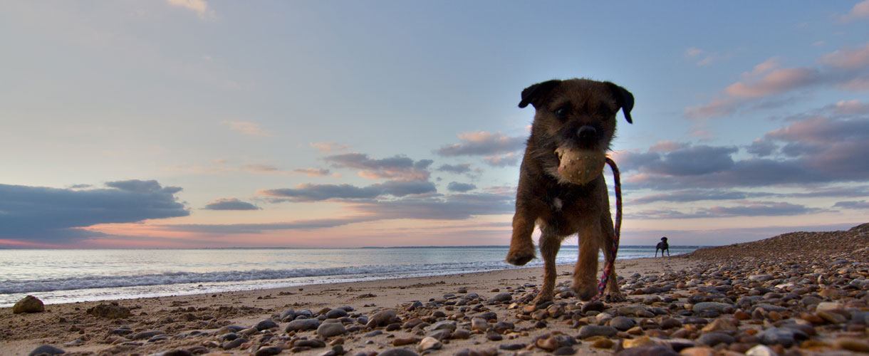 Four Legged Friendly Holiday on the Isle of Wight