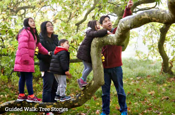 Guided Walk: Tree Stories - October - What's On - Isle of Wight