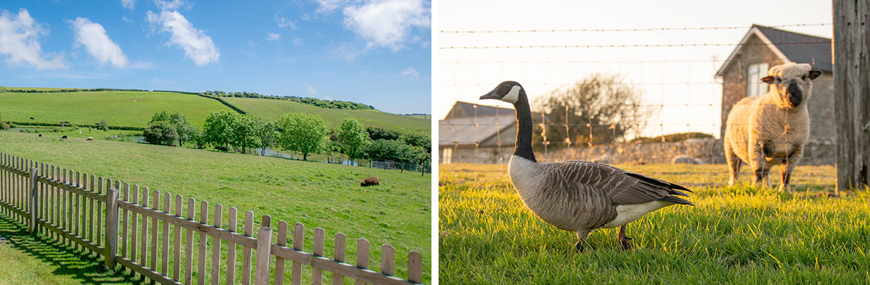 Win a holiday for six people at Nettlecombe Farm