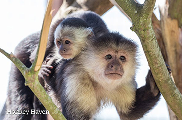 Monkey Haven on the Isle of Wight - February Half Term