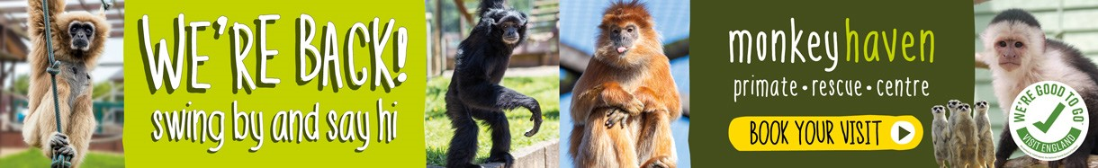 Monkey Haven - attraction - Isle of Wight