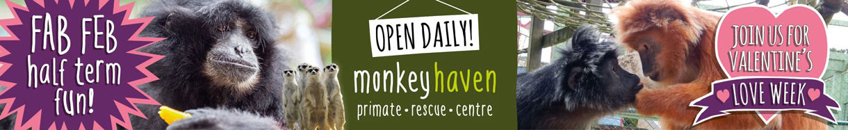 Monkey Haven, Isle of Wight