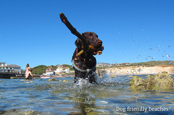 Dog Friendly Beaches - Isle of Wight