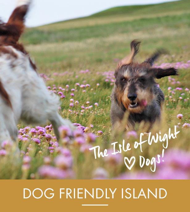 Dog Friendly Breaks |