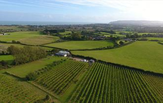 Isle of Wight, Attraction, Adgestone Vineyard, Ariel View of Vineyard
