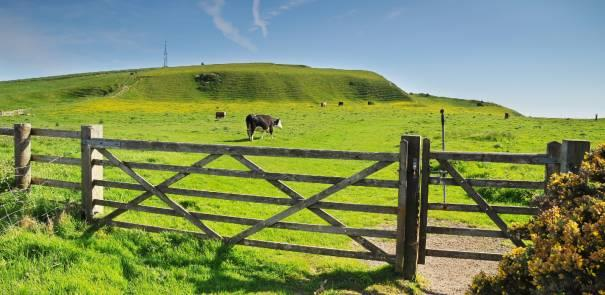 View of Isle of Wight footpath leading into a field with grazing cattle.