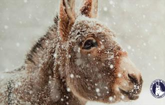 Isle of Wight, Things to Do, Christmas Market, Donkey Sanctuary, Ventnor