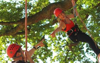 #21 - Reach new heights in a treetop adventure with Goodleaf