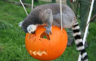 Halloween activities at the Isle of Wight Zoo - What's On, Isle of Wight