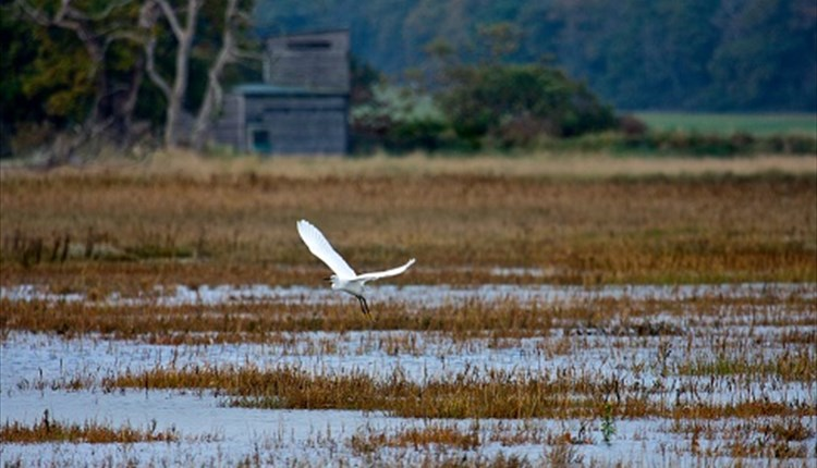 Birdwatching at Newtown National Nature Reserve, Things to Do, Isle of Wight