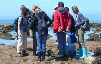 Isle of Wight, Family Fun, Event, Beach Fossil Walk, Brook