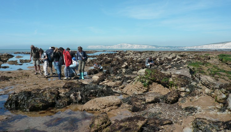 Isle of Wight, Things to Do, Fossil Walk, Compton Beach, West Wight, Dinosaur Isle