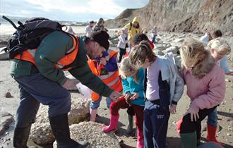 Christmas fossil walk in Sandown - What's On, Isle of Wight
