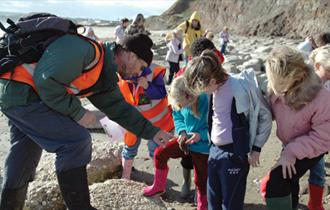 Isle of Wight, Things to Do, Fossil Walk, Yaverland Beach, Dinosaur Isle