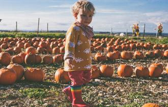 Pick a pumpkin at Tapnell Farm Park - What's On, Isle of Wight