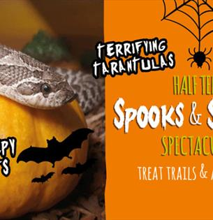 Isle of Wight, Things to Do, October Half Term, Halloween, Monkey Haven, NEWPORT