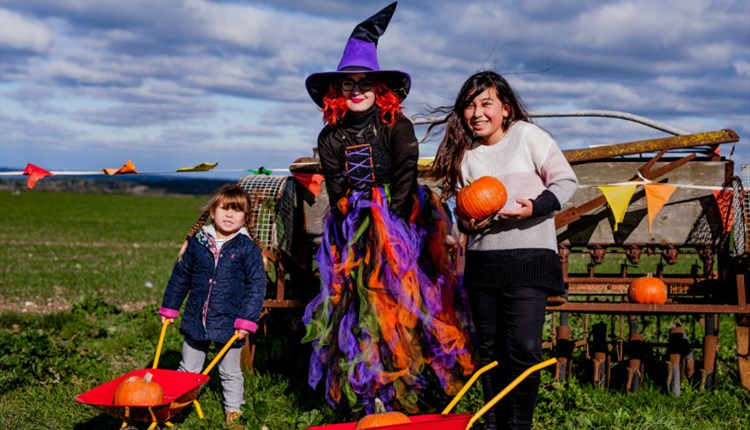 Isle of Wight, Things to Do, October Half Term, Halloween, Tapnell Farm Park, YARMOUTH