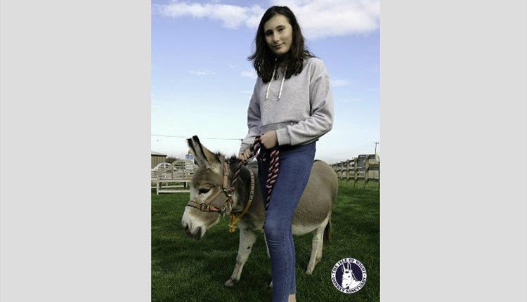 Isle of Wight, Things to Do, Donkey Sanctuary, VENTNOR, Walk a Donkey Days