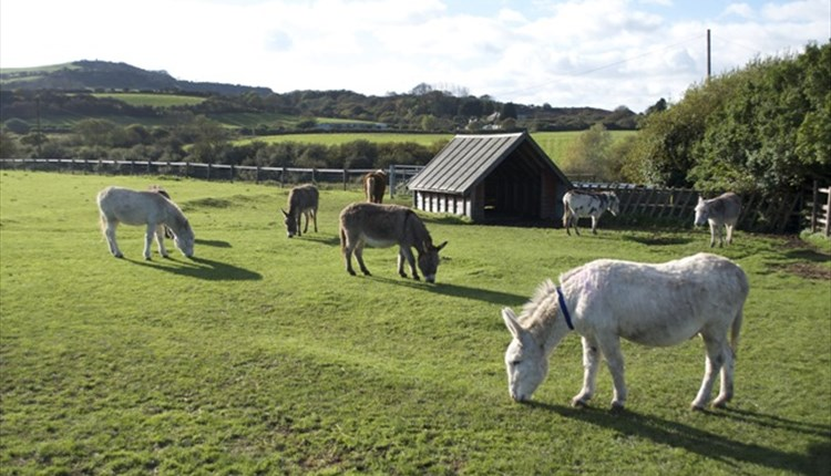 #35 - Adopt your very own sidekick for Shrek at Isle of Wight Donkey Sanctuary