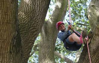 Isle of Wight, Things to Do, Cowes Week, Goodleaf Tree Climbing, Image of Lady in harness climbing large tree