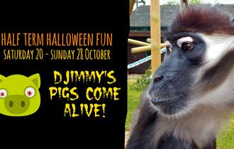 'Djimmy's pigs come alive' at Monkey Haven this Halloween