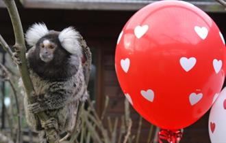 Feel the love at Monkey Haven this half term